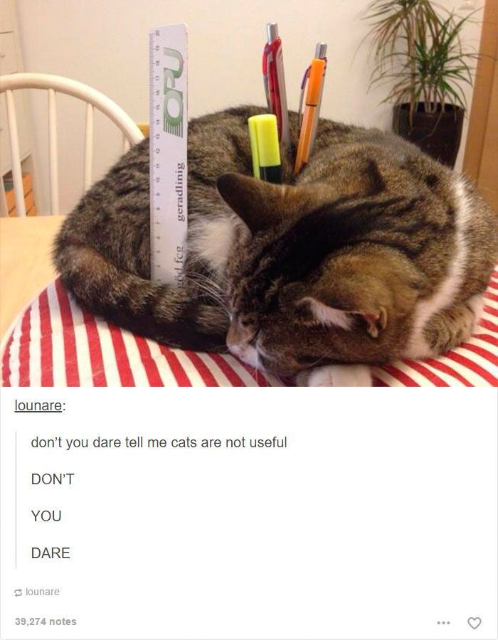 Photo of 48 Of The Funniest Cats On The Internet