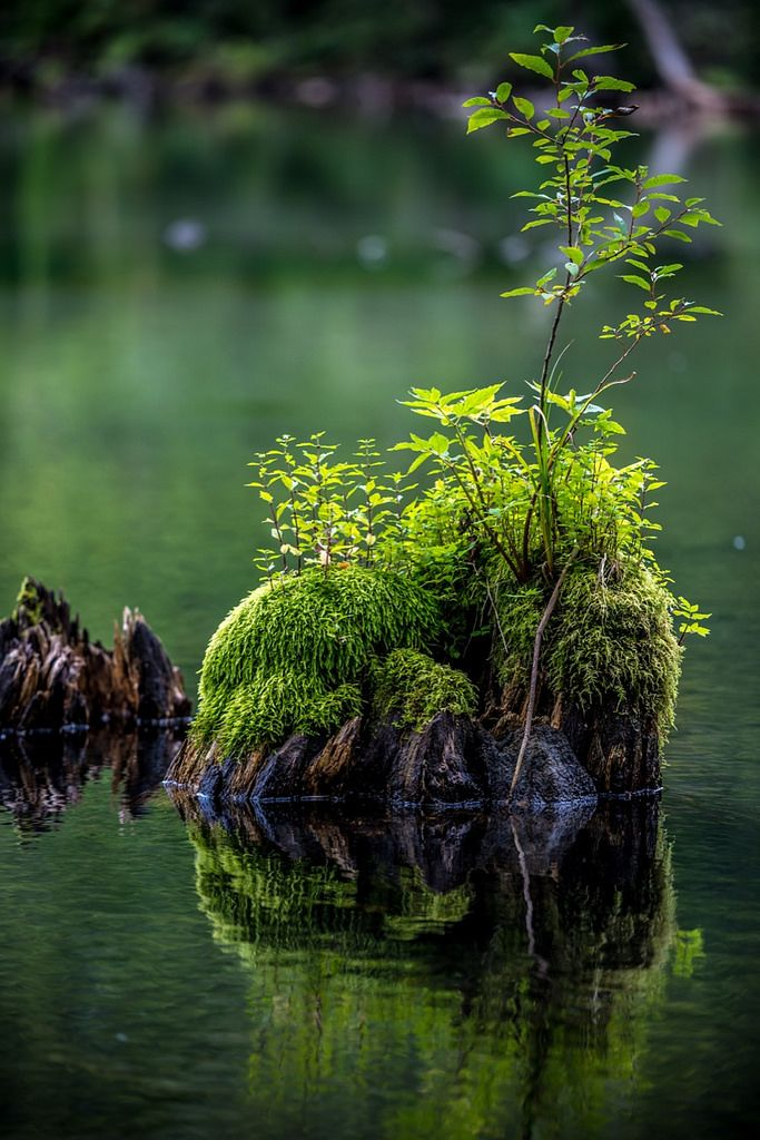 moss covered tree stump + water | nature photography