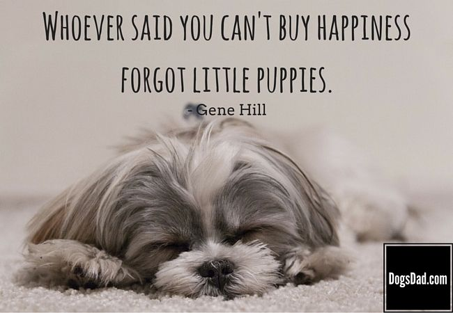 Cute Puppy Quotes| Quotes and Sayings about Puppies and Dogs ...