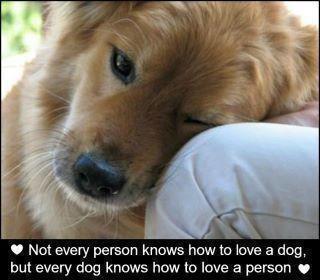 a dog's love  Fur baby.