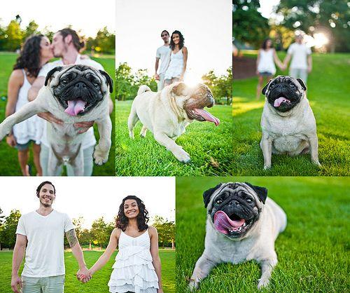 205 Of 365 Goods Family Pug Wedding Wedding Photoshoot Pre