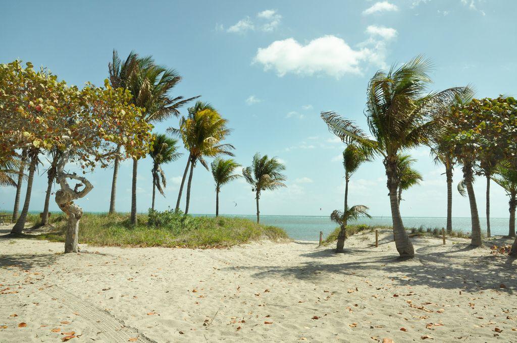 Crandon Park, Paradise Cove, Closeup (Key Biscayne
