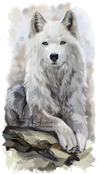 White Wolf By Kajenna Wolf Art Wolf Photos Wolf Spirit Animal