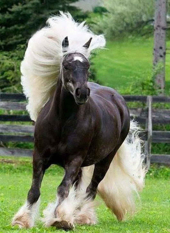 девушка картинки про породистых лошадей обработки