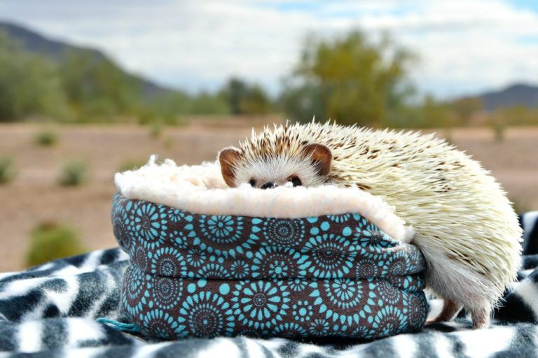 Read This To Help Decide If Hedgehogs Make Good Pets For Kids Best Pets For Kids Animals For Kids Hedgehog Pet