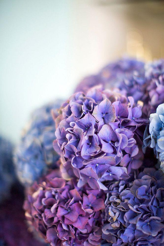 2018 pantone color of the year, pantone color of the year 2018, closeup of purple flowers, pantone ultra violet, dark purple, violet