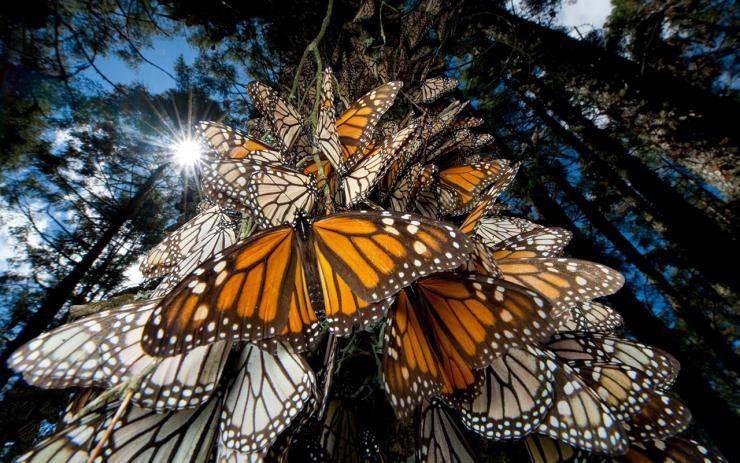 De una extensión de 56 mil 259 hectáreas, esta reserva de biósfera se sitúa en medio de montañas con mucha vegetación a unos 100 km al noroeste de Ciudad de México. Foto: taringa.net