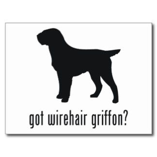 wirehaired pointing griffon   Wirehaired pointing griffon ...