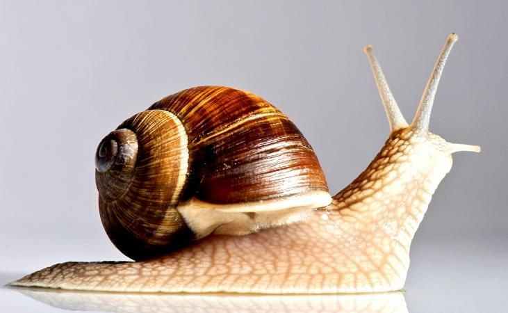 Snail Facts for Kids (With images) | Snail, Snail facts ...