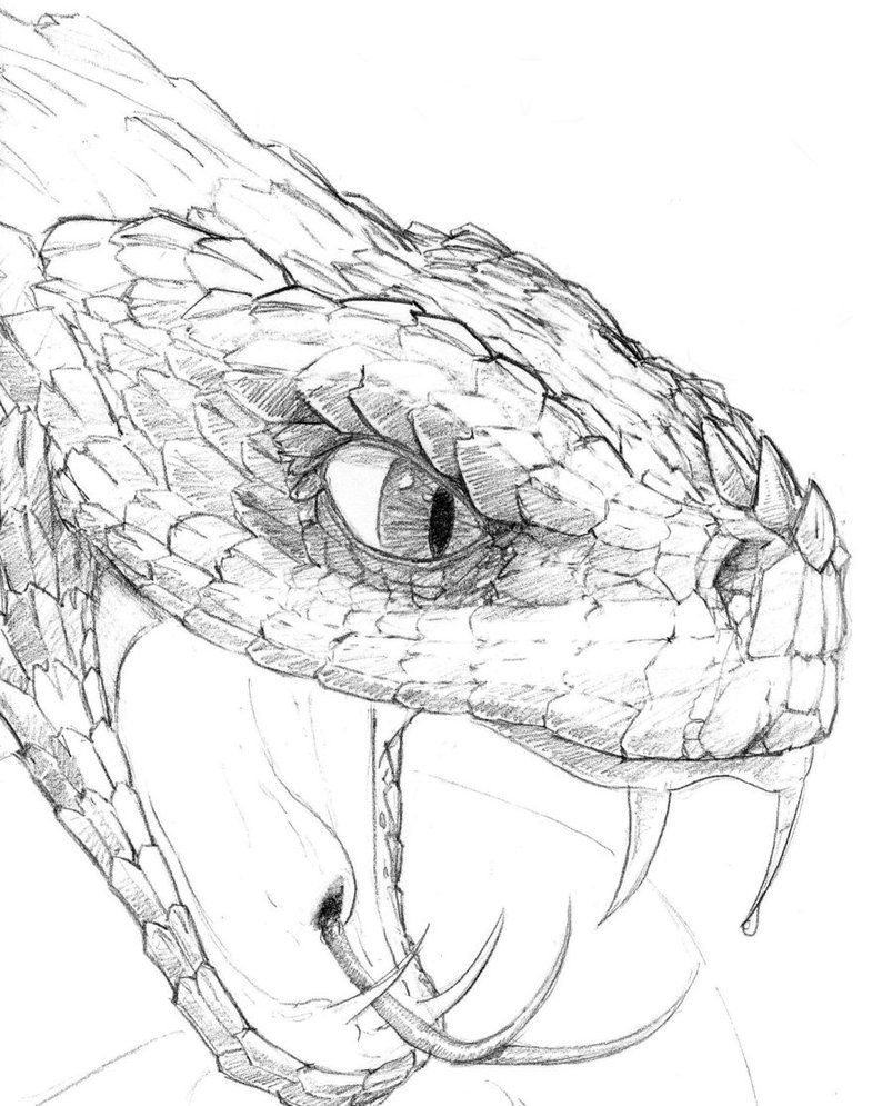 Snake Head Drawing Google Search Dessin Serpent Dessin Tete
