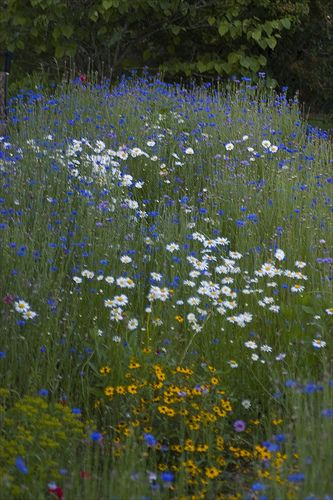 Wildflowers - want this for our backyard