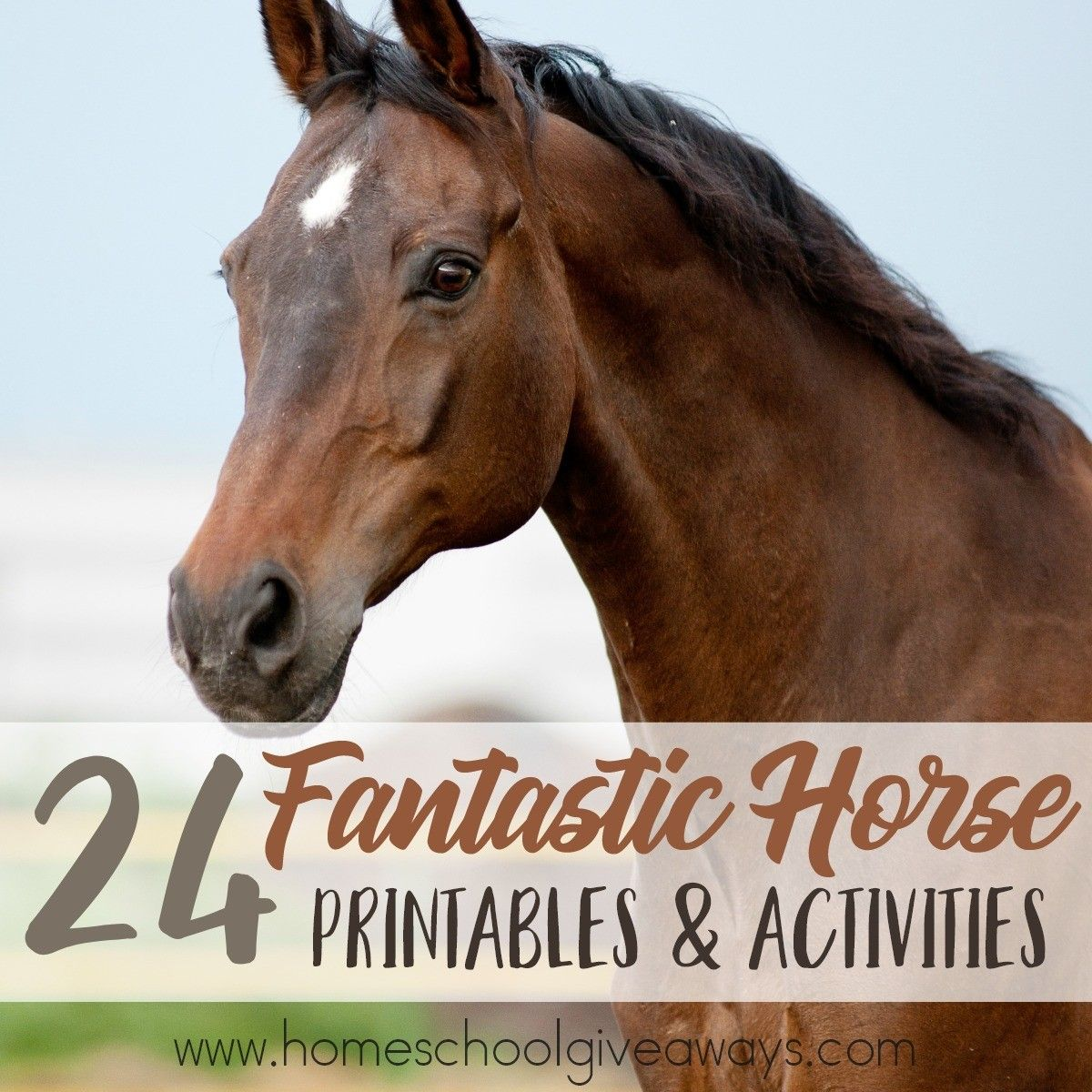 Facebook Twitter Pinterest I Love Horses I Am Not A Fan Of Riding Them Since I Was Thrown From One In College But I Love To W Horses Horse Anatomy Activities [ 1200 x 1200 Pixel ]