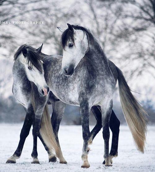 Geteilt von mattamanga. Finden Sie Bilder und Videos zu Pferd, Schnee und Winter auf We Heart It – d
