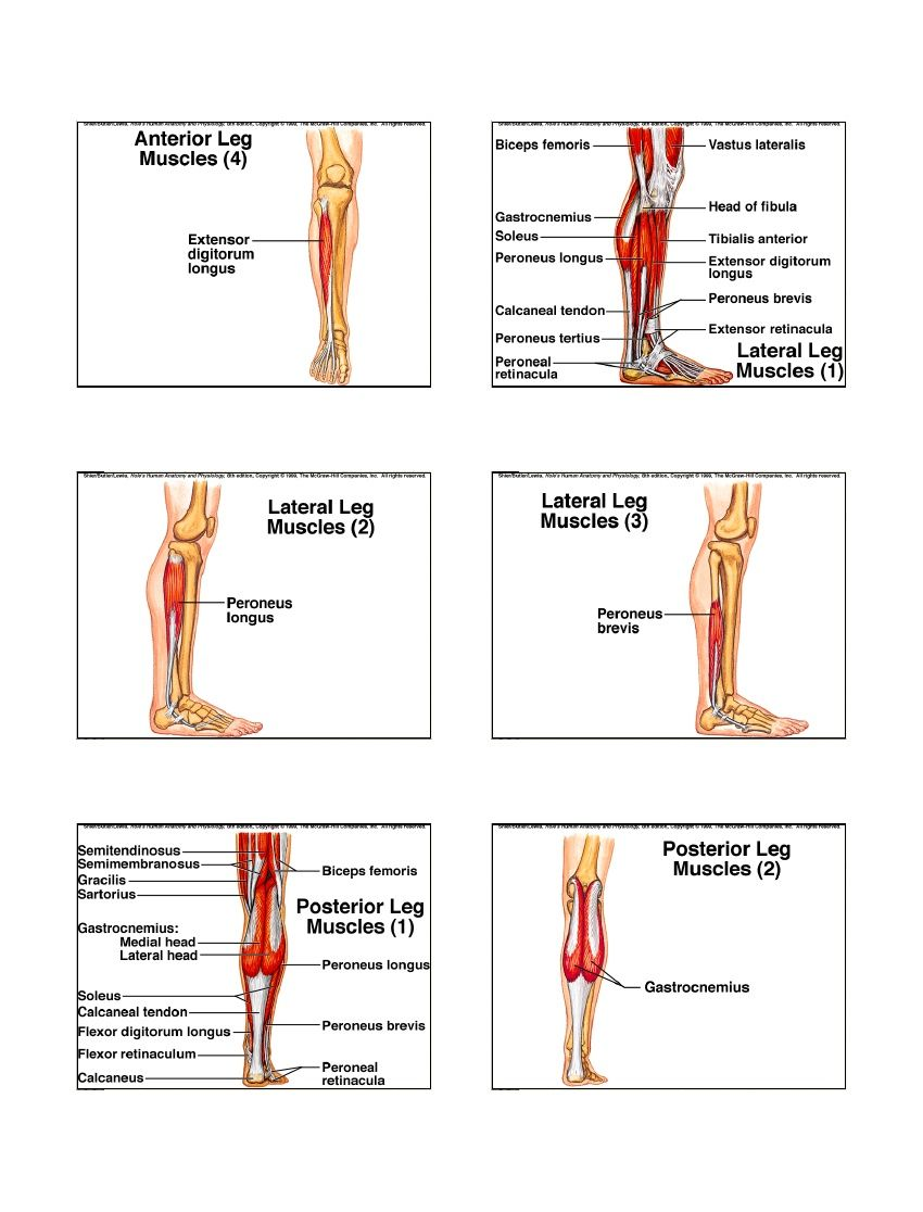 Muscular Chp9   Muscle Contraction   Massage n MF release ...