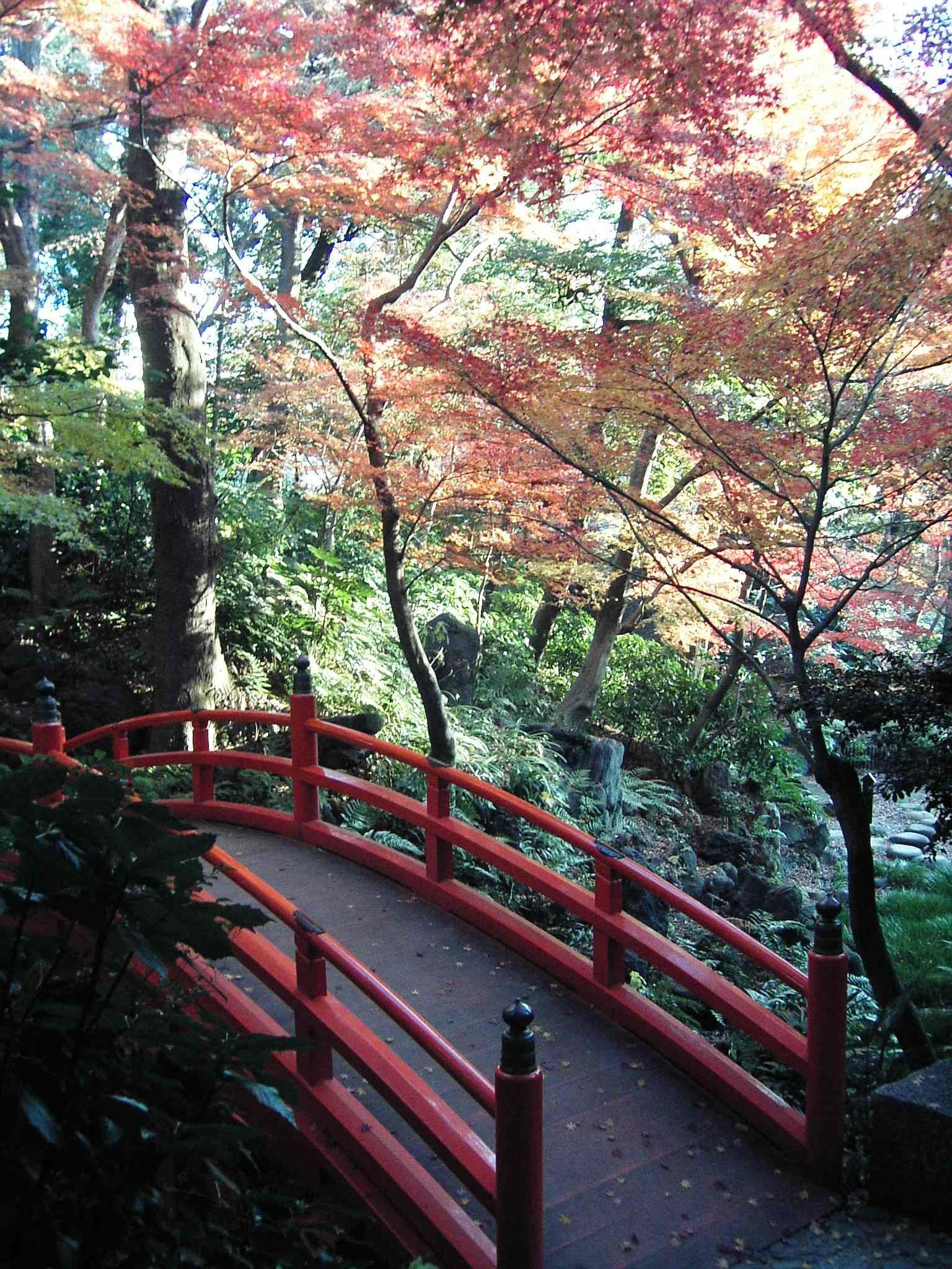 bridge - Japanese Garden Cherry Blossom Bridge