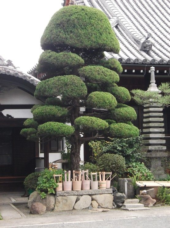 Japanese Traditional Garden Japanese Cloud Tree Japan Garden