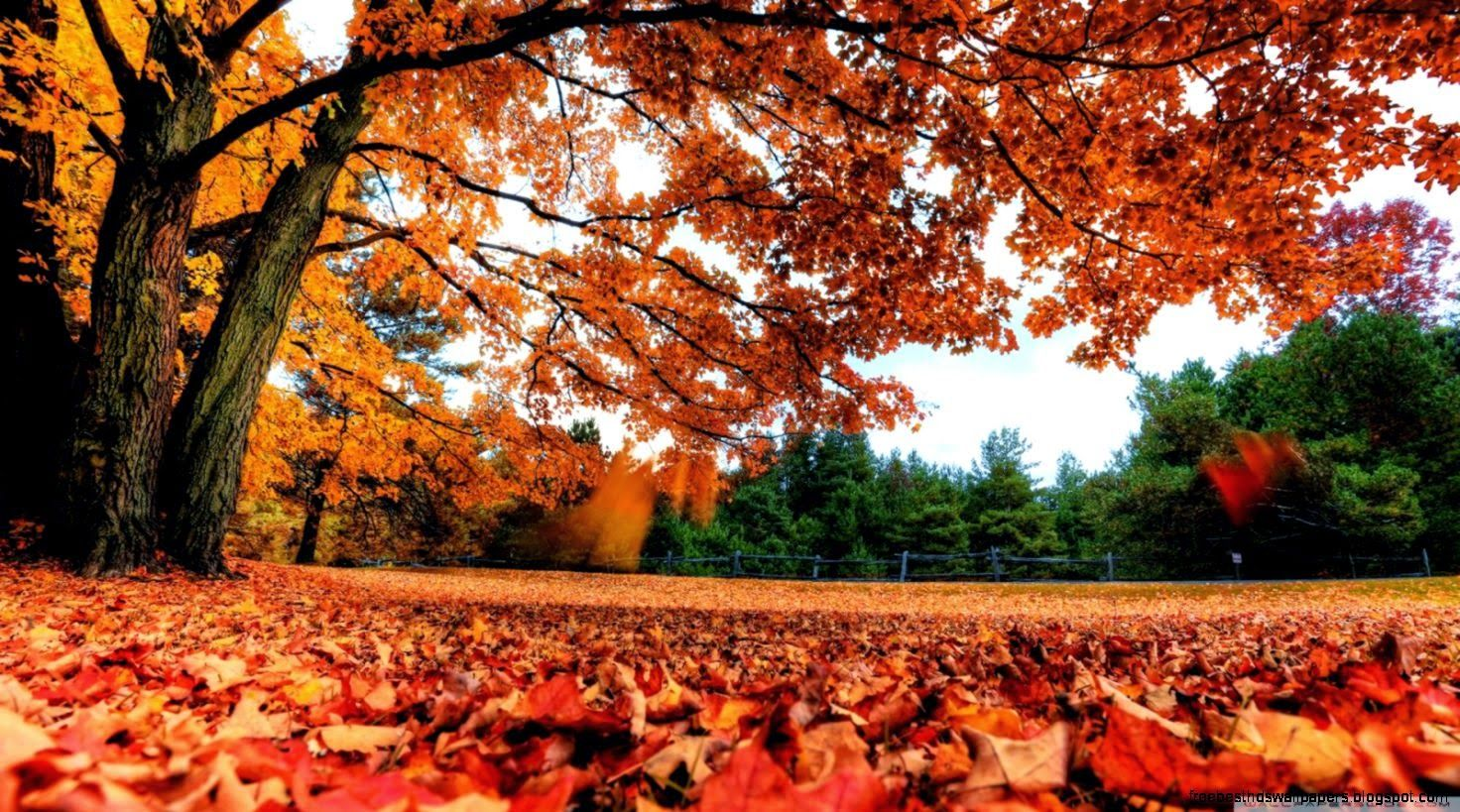 Autumn Country HD Desktop Wallpaper Widescreen High Definition