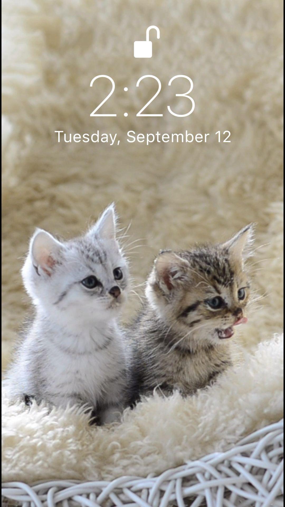 Cute Kitten Wallpaper Video Iphone Wallpaper Cat Kittens Cutest Kitten Wallpaper