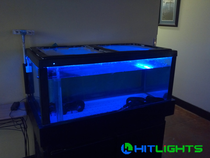 Add Color To Your Fish Tank With Waterproof Led Light Strips
