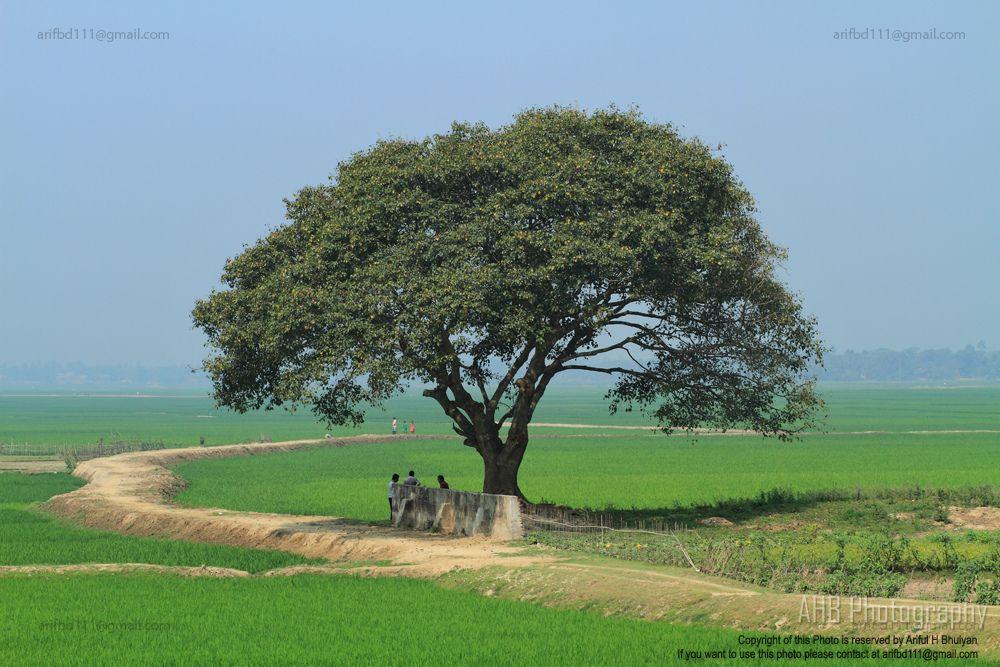 Nature Photography Of Bangladesh Village Nature Of Bangladesh By Ariful H Village Photos Nature Landscape Photos