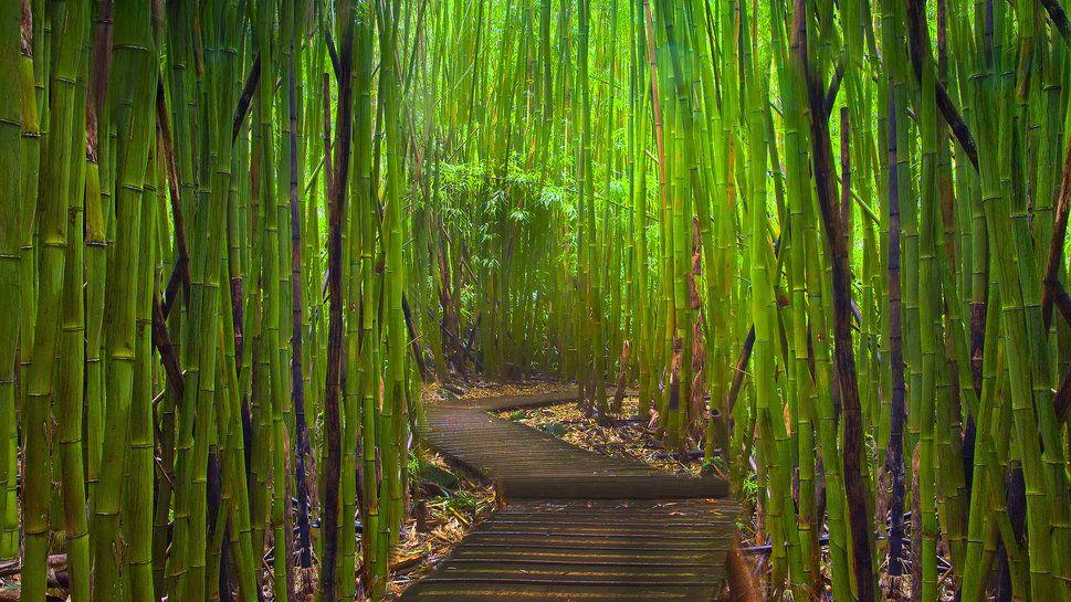 Bambus Labyrinth Vektorgrafik Bamboo Pinterest Places