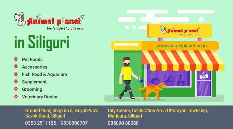 Best Pet Product Shop In Siliguri Animel Planet Pet Store Pets Online Pet Store