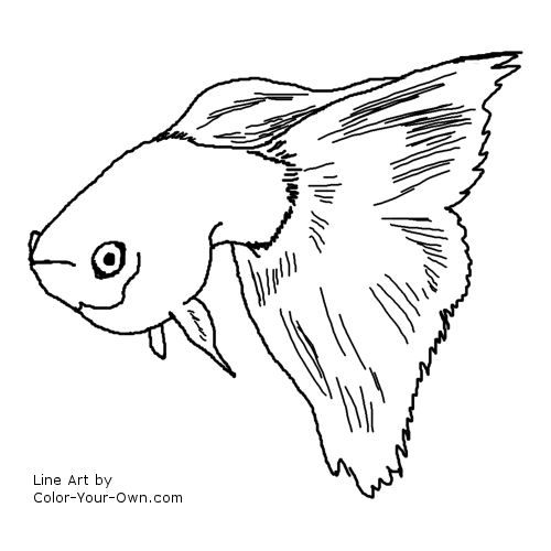 Fancy Guppy Coloring Page Fish Drawings Colorful Drawings Guppy