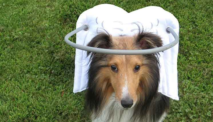 In S Halo The Original Blind Dog Vest Our For Dogs Ist