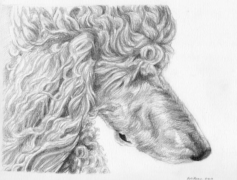 Poodle Drawing Poodle Poodle Dog