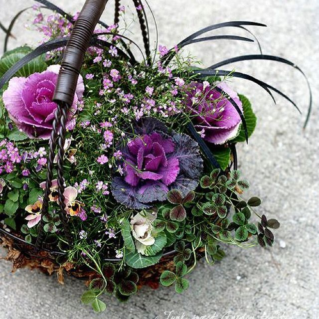 Planting Kale In Pots: Ornamental Cabbage For Fall