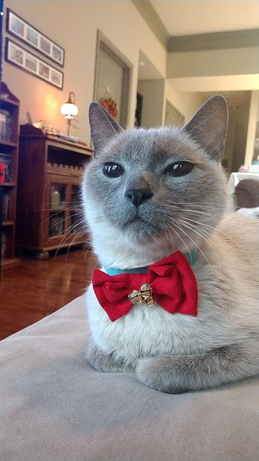 Today was pretty rough. My sweet little siamese was