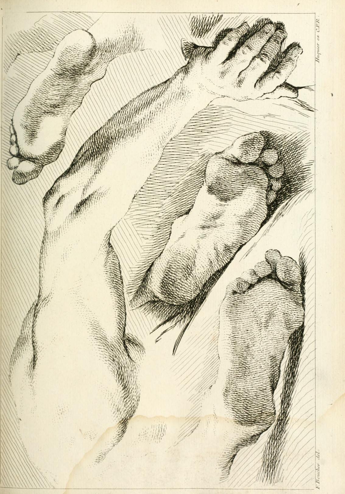 Théorie de la figure humaine : considérée dans ... | Human Anatomy ...