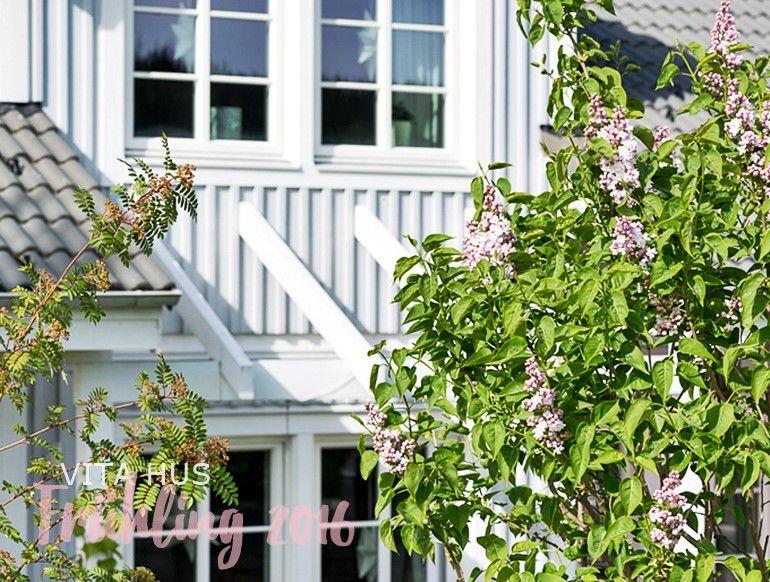Tulpen rosa, weiss, violett, Mai, Blumen
