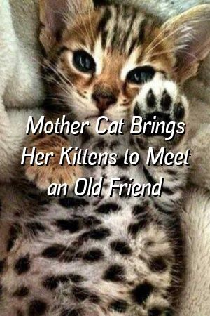 Kylie Dyer Tells About Mother Cat Brings Her Kittens to Meet an Old Friend   #meowpassion  #catlover  #catlife  #dogs  #lovecats  #fluffykittens  #Cats  #Tabby