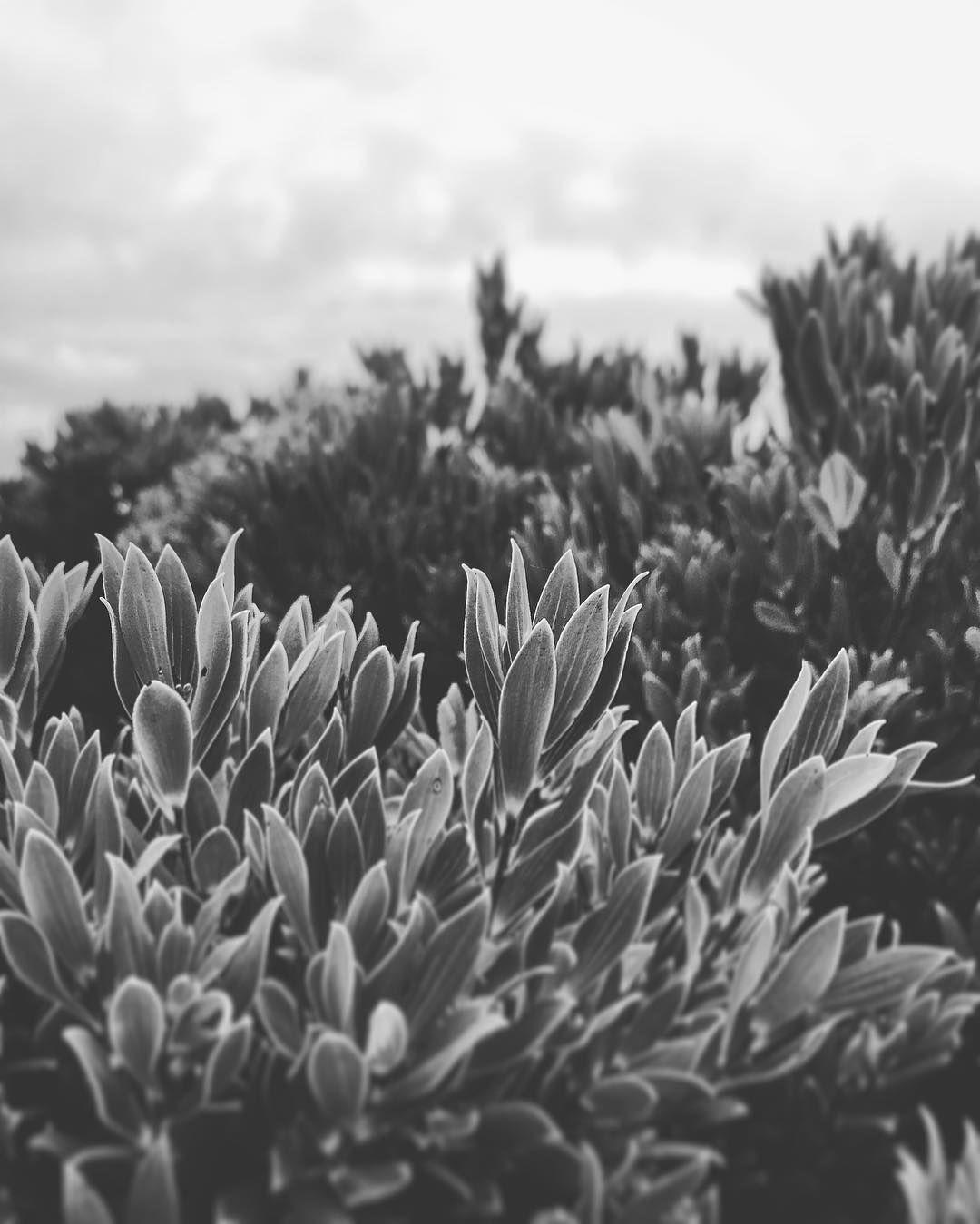 Bush) by gentle_flowers http://ift.tt/1ijk11S