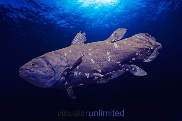 Coelacanth. Just goes to show you that just because you don't see it doesn't mean it's not there.