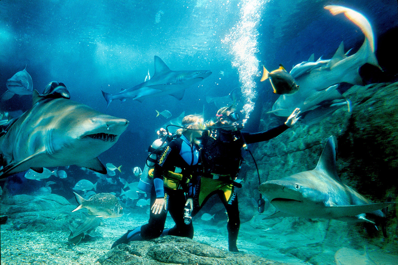 Shark Dive at SEA LIFE Sydney Aquarium with Video Shark