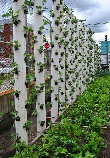 fraisiers verticaux potager pinterest fraise jardins et fraisier. Black Bedroom Furniture Sets. Home Design Ideas