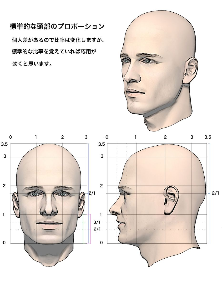人物頭部の標準的なプロポーション 1 顔 描き方 顔のスケッチ 解剖学的な描き方