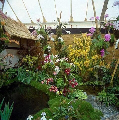 Amazing award winning orchid display