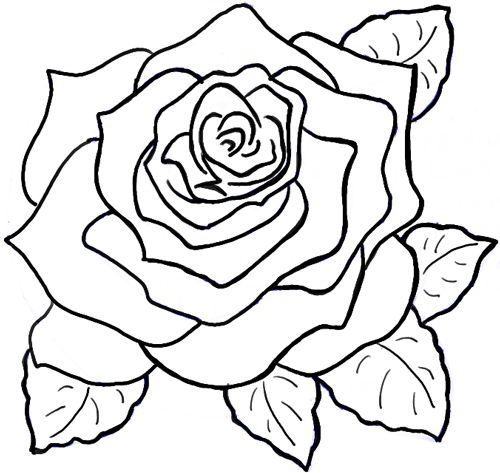 Line Drawing Tutorial : How to draw roses opening in full bloom step by