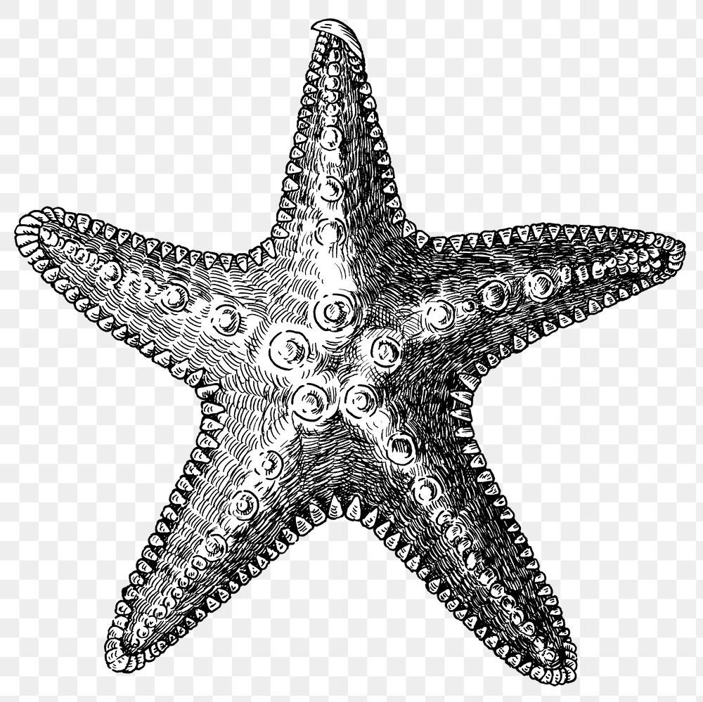 Download Premium Png Of Black And White Starfish Png Transparent 2764494 Animal Stickers Png Starfish