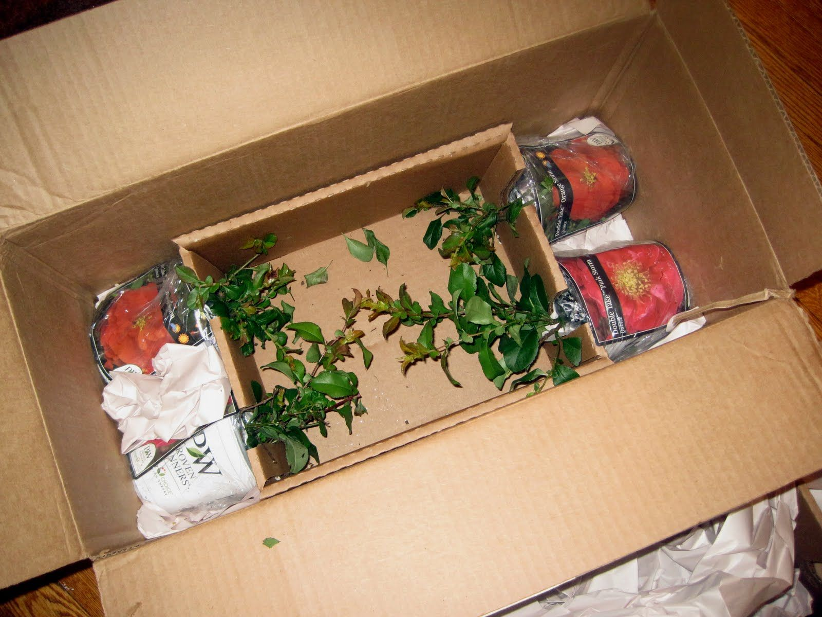 """plant packing boxes - """"Google"""" paieška 