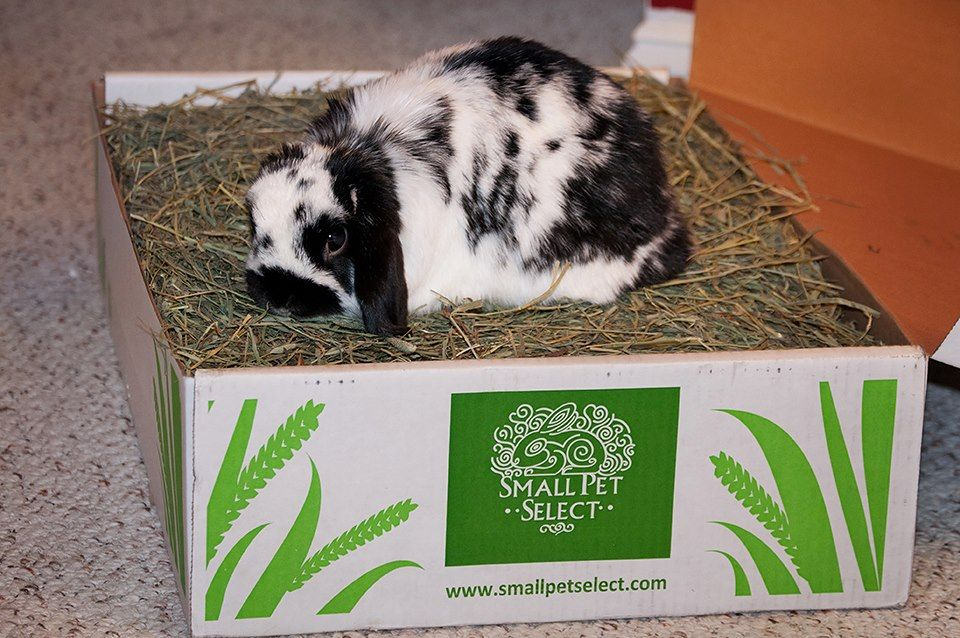 Timothy Hay for Rabbits Small Pet Select Hay delivered