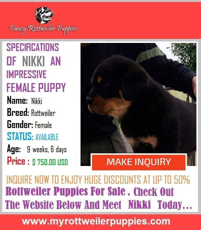 Enormously Playful Fancy German Rottweiler Puppies For Sale Mascotas