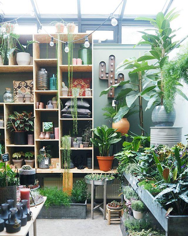 Green greener greenest! Plantstore Groene Vingers in Delft by @hipaholic