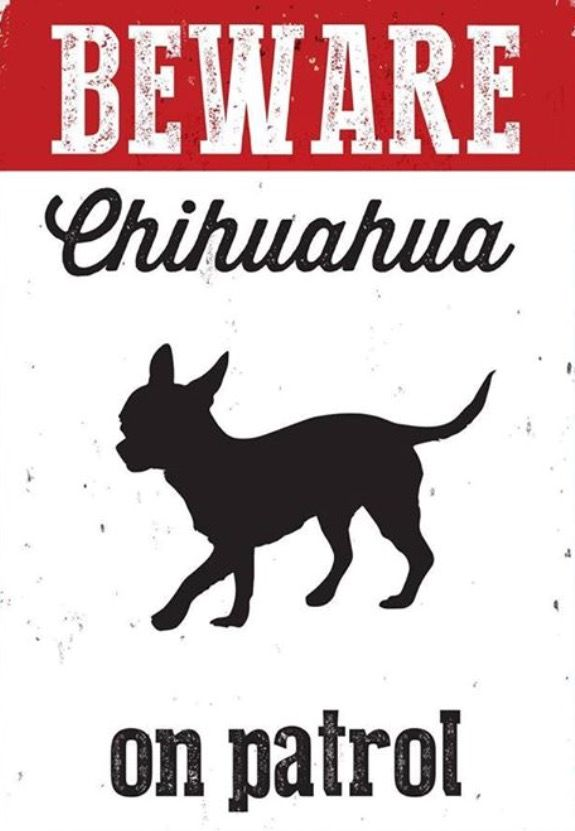 Pin On Chihuahua Lover