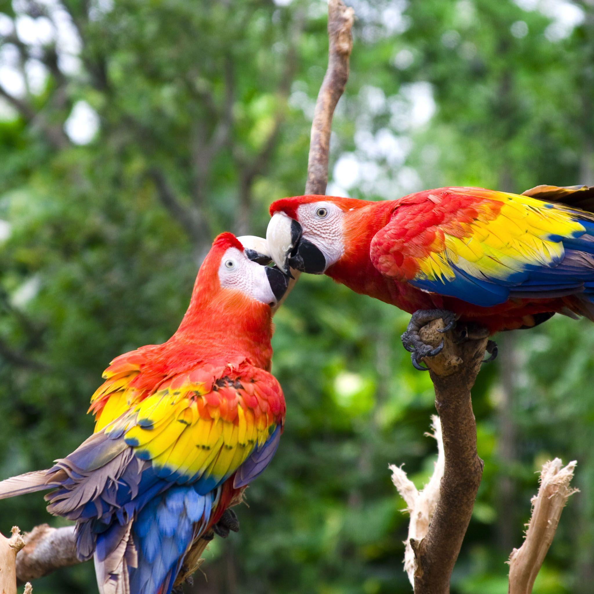 Love Parrots / HD IPad Wallpapers