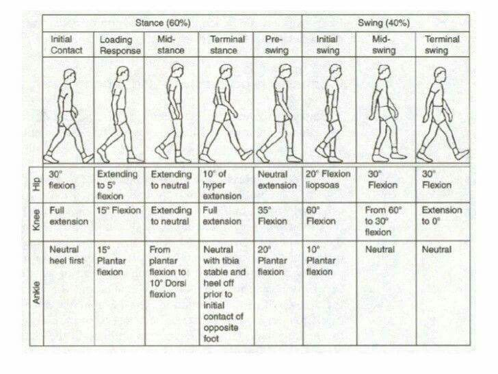 Gait analysis Physical Therapy Pinterest Pta, Physical - physical therapy evaluation