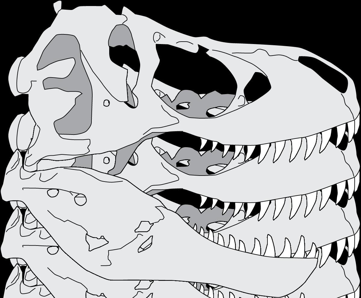 Череп тираннозавра картинки